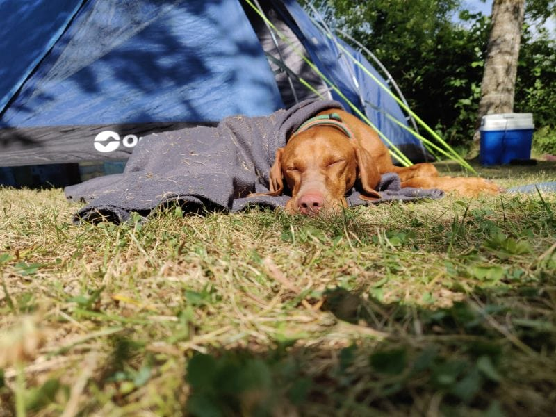 Dog Runa was also tired from the long trip. Time for a little nap by the tent...